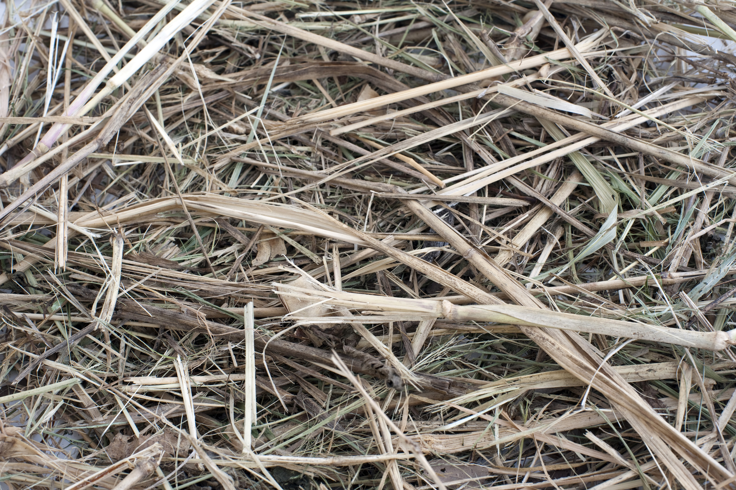 hay_background.jpg - Background of dried hay or straw produced from natural grass and used mainly for winter fodder and bedding for livestock