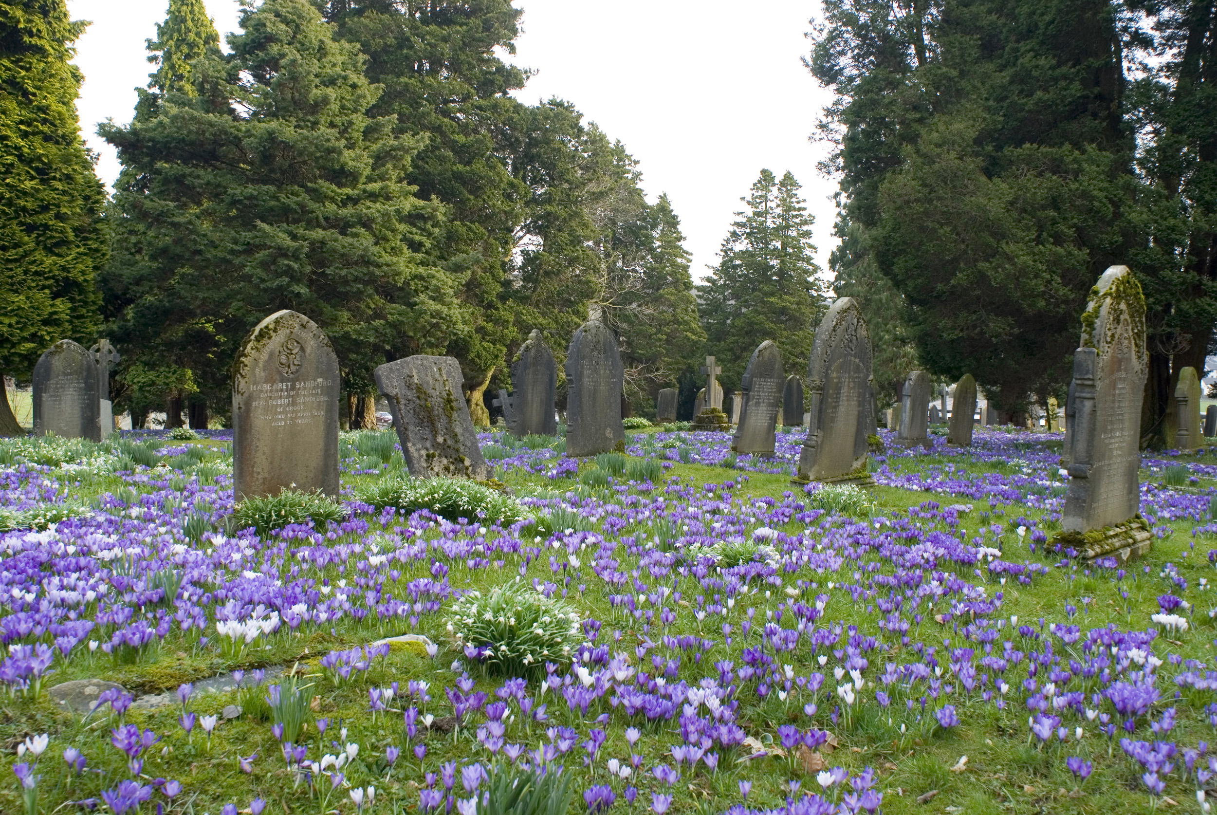easter_graves.jpg - Easter country graveyard and graves blanketed with colourful flowering crocuses and surrounded by green trees